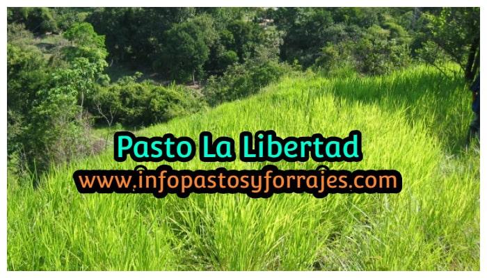 Pasto La Libertad