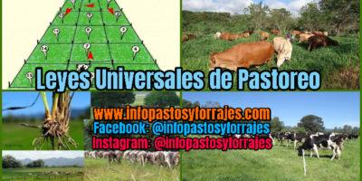 Leyes universales de Pastoreo rotacional Voisin