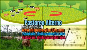 Pastoreo Alterno