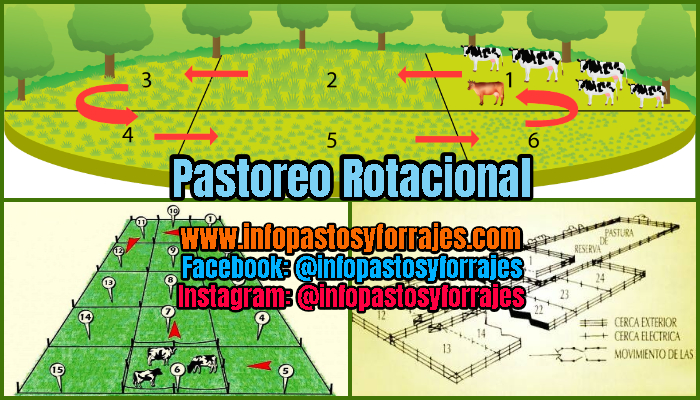 Pastoreo Rotacional