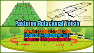 Pastoreo Rotacional Voisin
