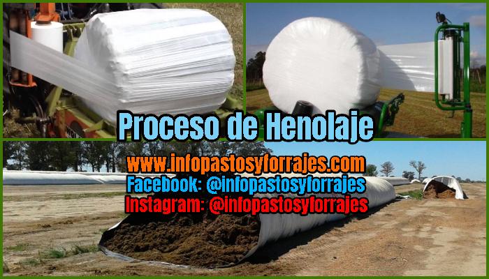 Proceso de Henolaje