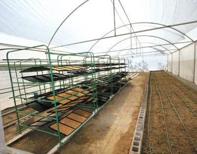 Invernadero Para Cultivo Hidropónico