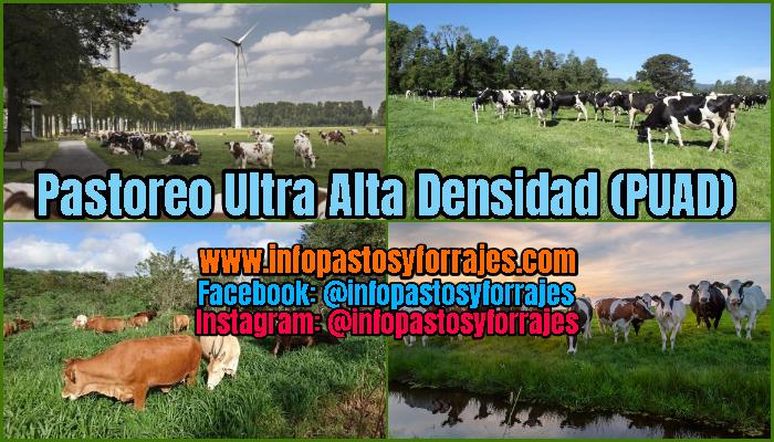 Pastoreo Ultra Alta Densidad