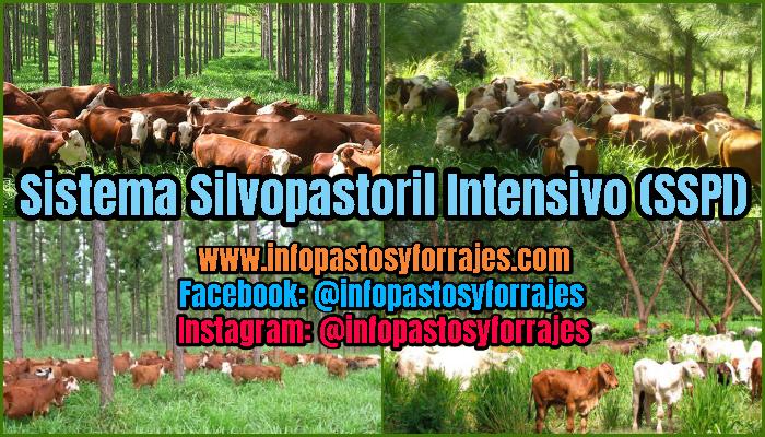 Sistema Silvopastoril Intensivo (SSPI)