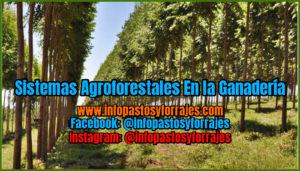 Sistemas Agroforestales En la Ganadería