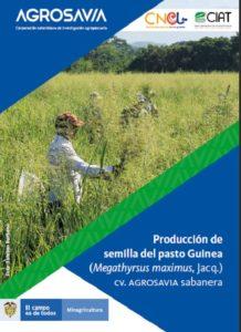 Manual: Producción de Semilla del Pasto Guinea Guinea (Megathyrsus maximus, Jacq.) Cv. AGROSAVIA sabanera