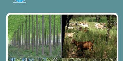 Libro - 3° Congreso Nacional De Sistemas Silvopastoriles – VIII Congreso Internacional Sistemas Agroforestales