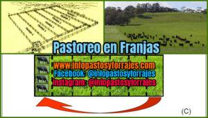 Pastoreo en Franjas