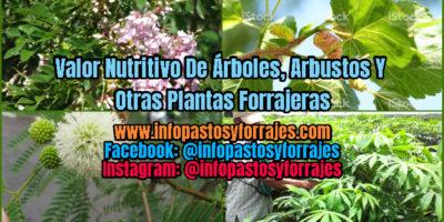 Valor Nutritivo De Árboles, Arbustos Y Otras Plantas Forrajeras