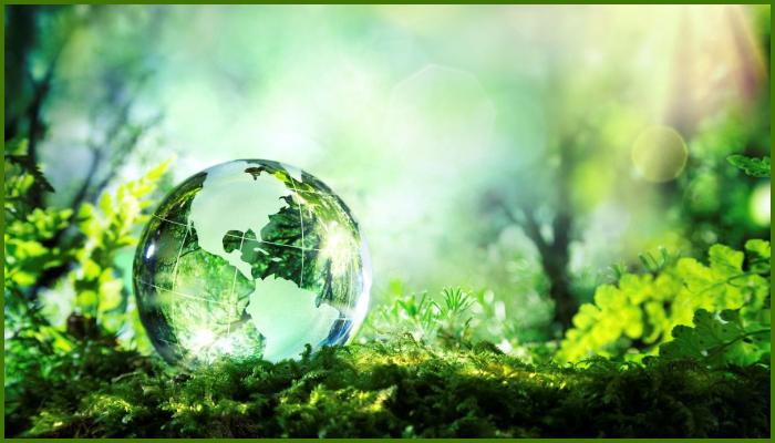 Plantar Árboles Para Eliminar El CO2, ¿No Es Una Solución